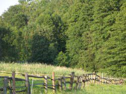 Schwammerln im Rottaler Wald